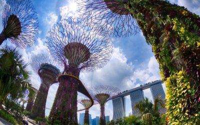 Сингапурский он-лайн курс